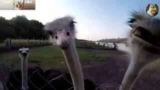 Смотреть Приколы с животными - крылатые юмористы | new crazy animals 48 онлайн