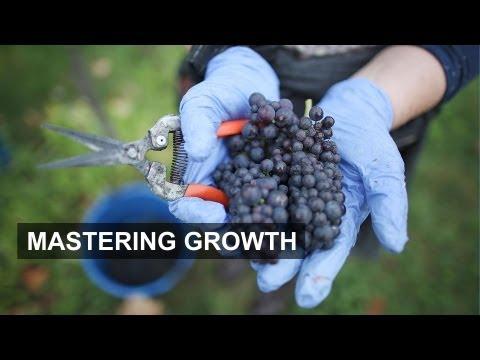 Vineyards invest to meet demand