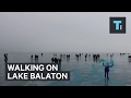 Thousands of people walk over largest lake in central Europe