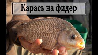 Карась на фидер Ловля фидером Секреты ловли Рыбалка 2020