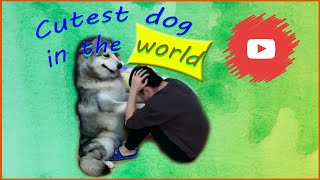 The best cutes and funniest dog 🐶 videos compilation - Animal Videos