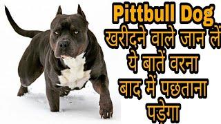 American Pittbull Dog खरीदने वाले जान लें ये बातें वरना बाद में पछताना पड़ेगा / Pittbull Dog price