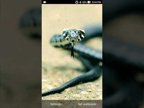 snakes live wallpaper - YouTube