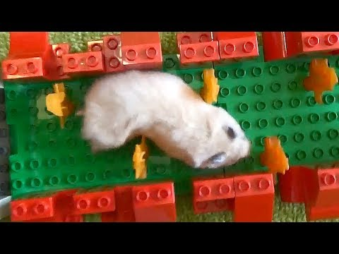 Hamster Lego Obstacle Course