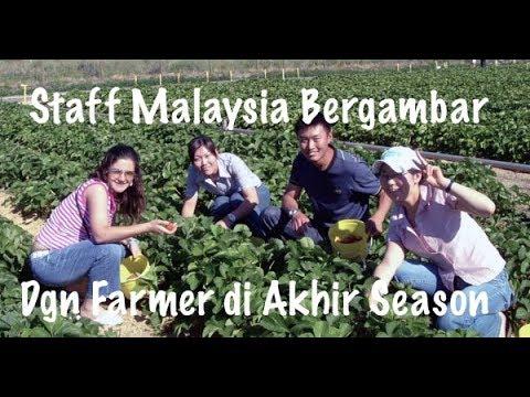 Staff Malaysia Bergambar Bos Farmer Australia.      ⭐  ⭐  ⭐  ⭐  ⭐    (KERJA DI AUSTRALIA TRUSTED).