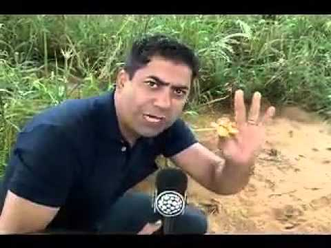 Repórter engraçado PHD em Macumba kkkk
