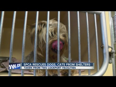 Dogs, Cats Rescued From Lockport Animal Shelters