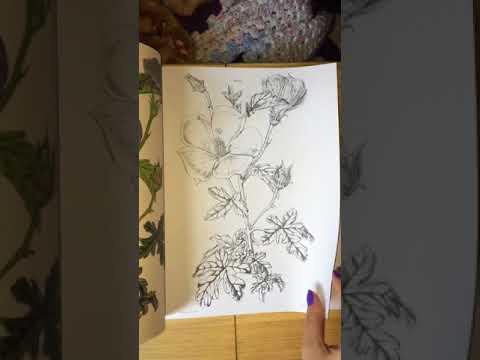 the-kew-gardens-beautiful-flowers-&-plants-flip-through