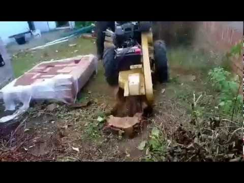 Stump grinding in bedfordshire - rayco rg20