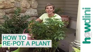 How to re-pot a plant - Tips for repotting plants