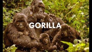 Baixar Aphex Twin Diary - Gorilla