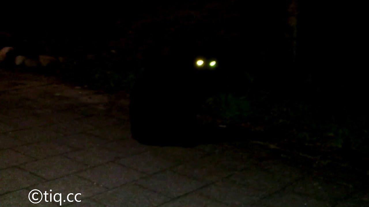 Led Cats Eyes