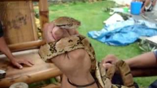 baksan sa cabawan philippine python