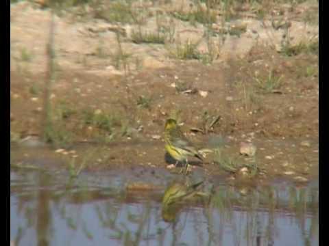 Birds bath uccelli al bagno 11 specie in un piccolo for Piccolo stagno