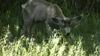 Introduction to video series: shedding light on chronic wasting disease