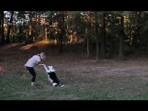 Girl and Dog Dance Beautifully Together!