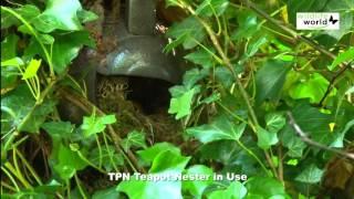 Wildlife World tekande fuglehus video