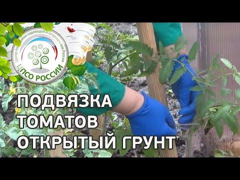 Горчица как удобрение в огороде Крупнейший форум для