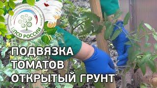 Как подвязать томаты в открытом грунте(В новом ролике проекта