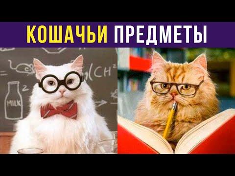 Приколы с котами. КУСЕМАТИКА И ЛОТОЧКОЗНАНИЕ   Мемозг #279