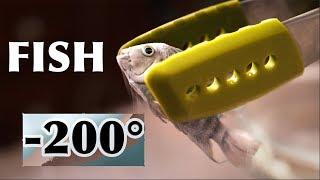 Will Fish Survive in Liquid Nitrogen?