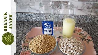 Probiyotik Kefir Mayalı Bakliyat Fermente Etme Tarifi, Faydaları ve Püf Noktaları