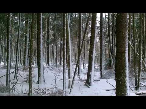 Solitude & Relaxation : Winter storm in the Boreal Forest 45min.