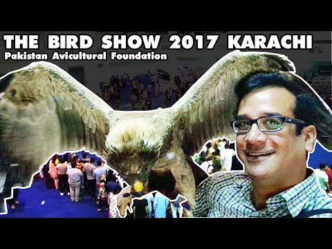 BIRD SHOW 2017 KARACHI EXPO CENTER | Pakistan Avicultural Foundation | Video in URDU/HINDI
