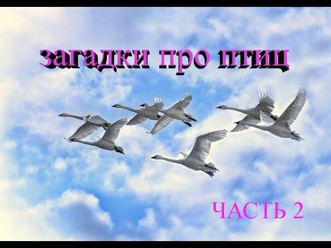 Загадки про птиц. Часть 2/ Riddles about birds.