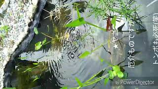庭に水路と池を作ろう 完成 一年後の様子