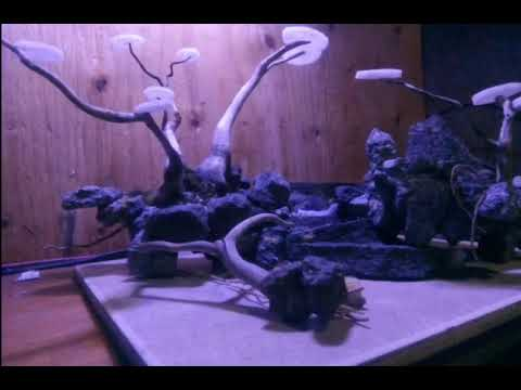 tutorial-hardscape-bonsai-aquascape-mudah-(agata)