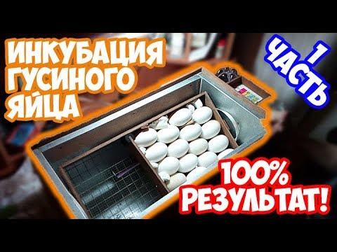 Видео Яйца курицы заработок в интернете