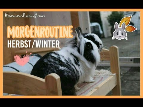 MORGENROUTINE bei den Kaninchen Herbst/Winter ❄☀   Kaninchenstar