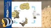 aquamaxx biomaxx biopellet reactor review youtube