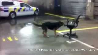 Police Dog Dancing To - Psy - Gangnam Style (강남스타일)