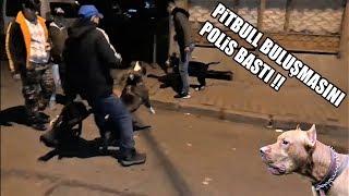 POLİS KÖPEKLERE SİLAH ÇEKTİ ÖLDÜRMEK İSTEDİ ( Pitbull Buluşmasını Polis Bastı ) Kesinlikle izleyin