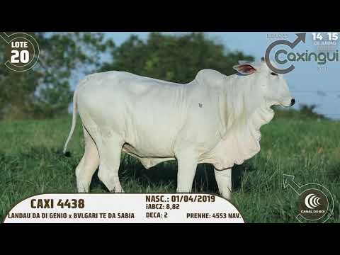LOTE 20   CAXI 4438