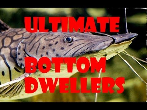 Bottom dwellers for