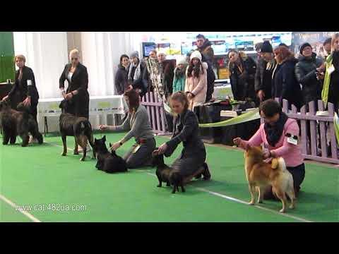 7  Выставка собак всех пород, Киев, февраль 2019, ACANA