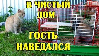 Гуляем с кроликом. Дружба кота и кролика. Как ухаживать за кроликом.