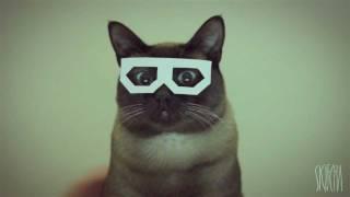 Кот в очках.mp4
