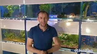 Что делать если в аквариуме высокая температура воды