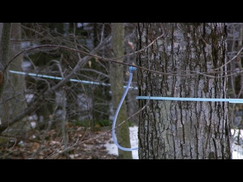 Modern system helps Vermont family boost maple syrup production