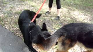 """The Canine Classroom - When """"luna"""" Met """"the Boss"""""""