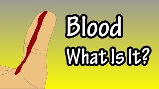 Blood - What Is Blood - Primary Functions Of Blood - Components Of Blood - What Does Blood Do