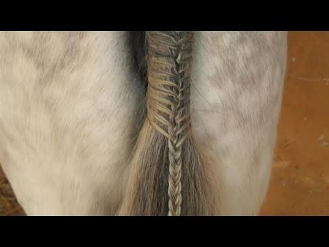 How To Learn Braiding A Horses Tail YouTube