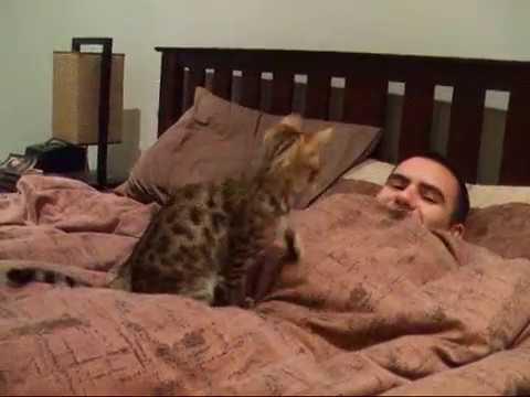 Cat behavior just before death