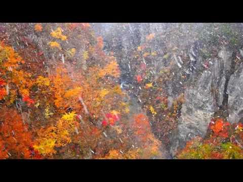 秋の日本の神秘は紅葉と雪とサルのコラボだよ