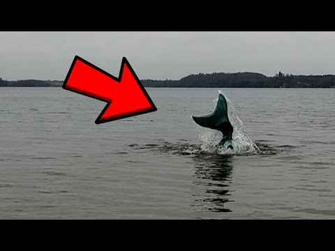 Mermaid Caught on Tape in Lake