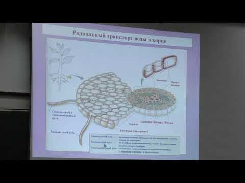 Носов А. М. Физиология растений I Водный обмен растений, растительная клетка